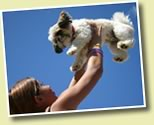 How to Be Good to Your Dog This Summer
