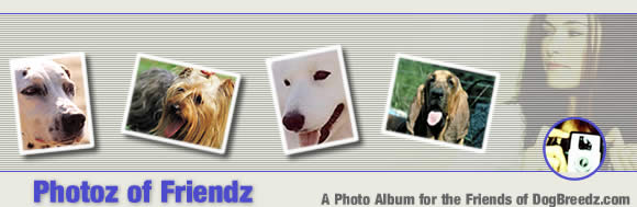 Photoz of your Friendz - A photo album for the friends of DogBreedz.com