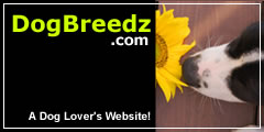 A Dog Lover's Website