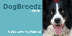 A Dog Lover's Website!